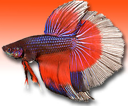Betta Products