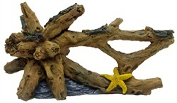 Driftwood with Starfish